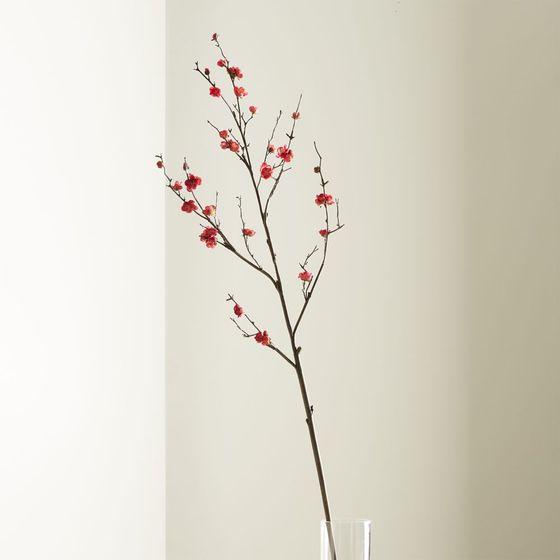 Rama-de-Brotes-de-Flor-de-Ciruela
