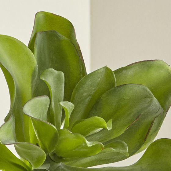 Rama-de-Suculenta--Kale-Kalanchoe--Artificial