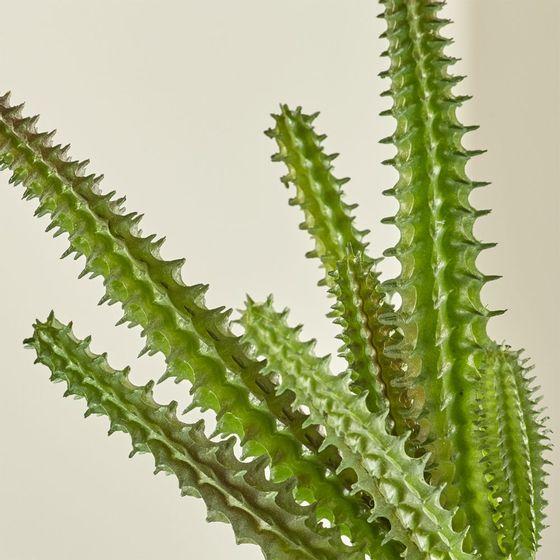 Rama-de-Suculenta--Stapelia--Artificial