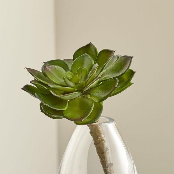 Planta-Suculenta-Verde-Decorativa
