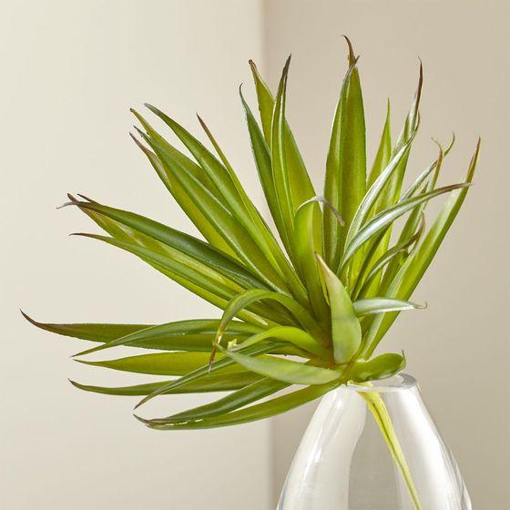 Planta-Suculenta-Verde-Larga-Decorativa